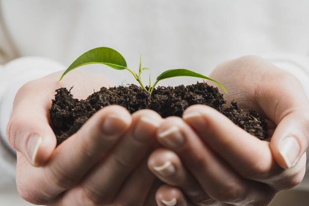 növényegészségügy